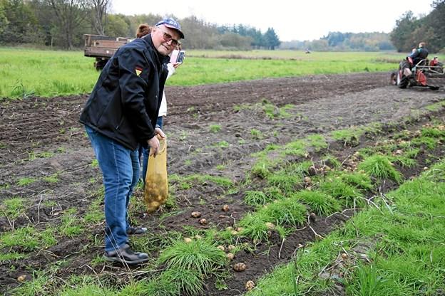 De besøgende kan samle kartoflerne op. Foto: Flemming Dahl Jensen