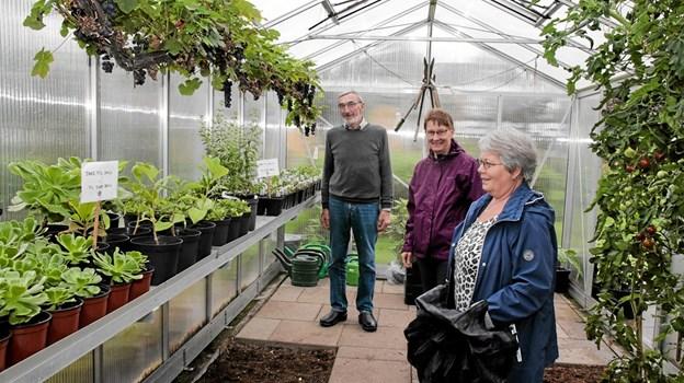Vagn Krogholm fortæller om planterne i drivhuset. Foto: Peter Jørgensen Peter Jørgensen