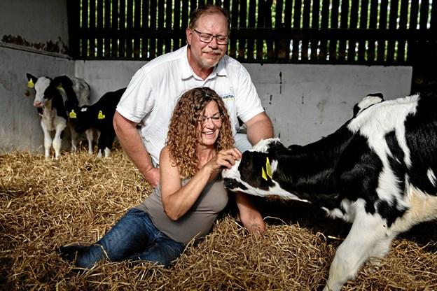 Helle og Per Warming viser søndag 16. september gerne deres gård ved Blære med 350 køer frem.