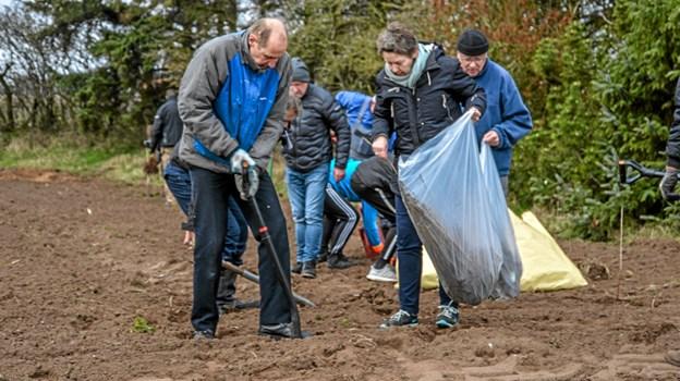 To og to gik arbejdet i gang med at plante de 4500 nye træer, der ad åre skal udgøre et stykke nyt skov i området. Foto: Mogens Lynge Mogens Lynge