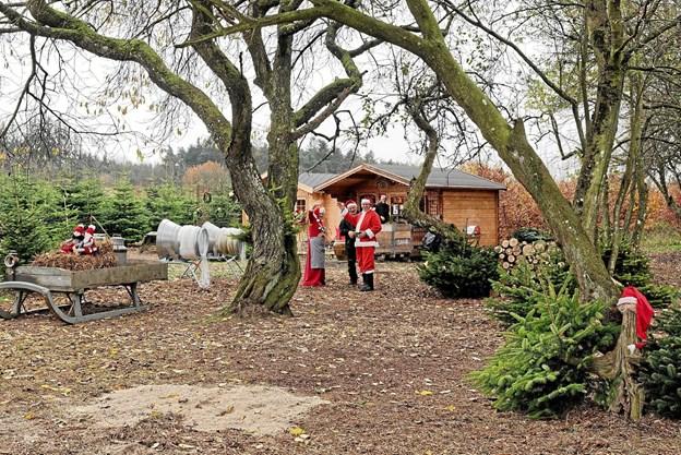Alle er velkommen på Stenderupgaard, der har åbent for salg af juletræer og juledekorationen hver dag helt frem til og med den 23. december. Foto: Niels Helver Niels Helver