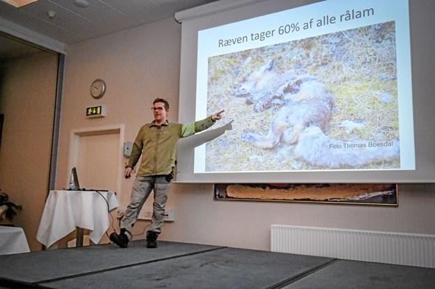 Thomas Boesdal kunne fortælle om en overdrevet frygt for ulve. de flygter straks de ser det mindste eller hører den mindste lyd. Og langt de fleste rålam nedlægges af ræve, fortalte han. Foto: Ole Iversen Ole Iversen