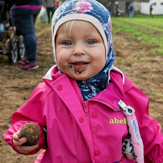 Fra jord til mund. Lisa synes, at kartoflen straks skal spises! Foto: Niels Helver