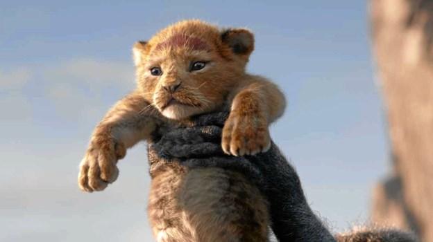 """Fra den kommende uge indtages lærredet i Løgstør Bio bl. a. af en opdateret version af Disney-klassikeren """"Løvernes Konge"""".  PR-foto"""