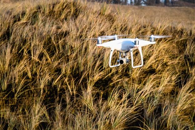 Droner kan være mindre forstyrrende for fugle, der ruger i kolonier, end hvis fugletællere går rundt på jorden og skræmmer fuglene på vingerne,