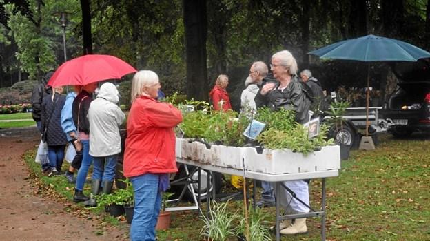 Der er plantemarked i Brønderslev 10. august. Privatfoto