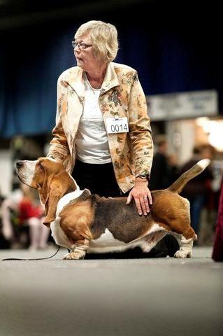 Der var hunde lige fra store Berner Sennen til lave Beagles og ivrige Jack Russell-Terrier. I alt 62 race var repræsenteret.