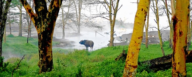 Hans Henrik Larsen fortæller og viser billeder fra sin safaritur i Kenya. FOTO: Hans Henrik Larsen