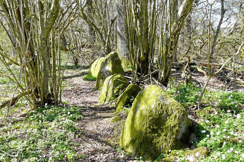 Odins Alter eller Odins Hylle ligger i Trinderup Krat. Privatfoto