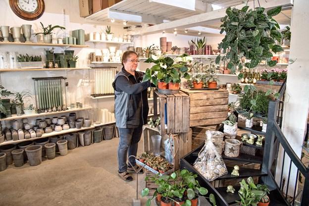 Grønthjørnets Blomster holder til i lokaler bag Ellen Johansens private bolig på Søndergade 90, og for hende er det blevet en livsstil at drive butikken.Foto: Henrik Louis