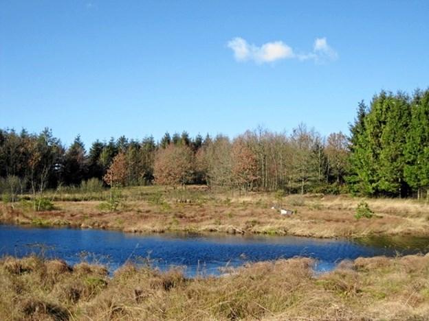 Sembygårds Hede - et smukt terræn. Privatfoto