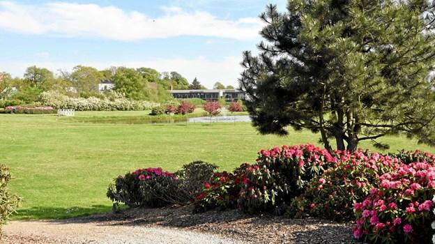 Fra parkeringspladsen ved Oremosevej er der en flot udsigt til den hvide bro, rhododendron, springvandet og blomstrende rødtjørn. Foto: Niels Helver Niels Helver