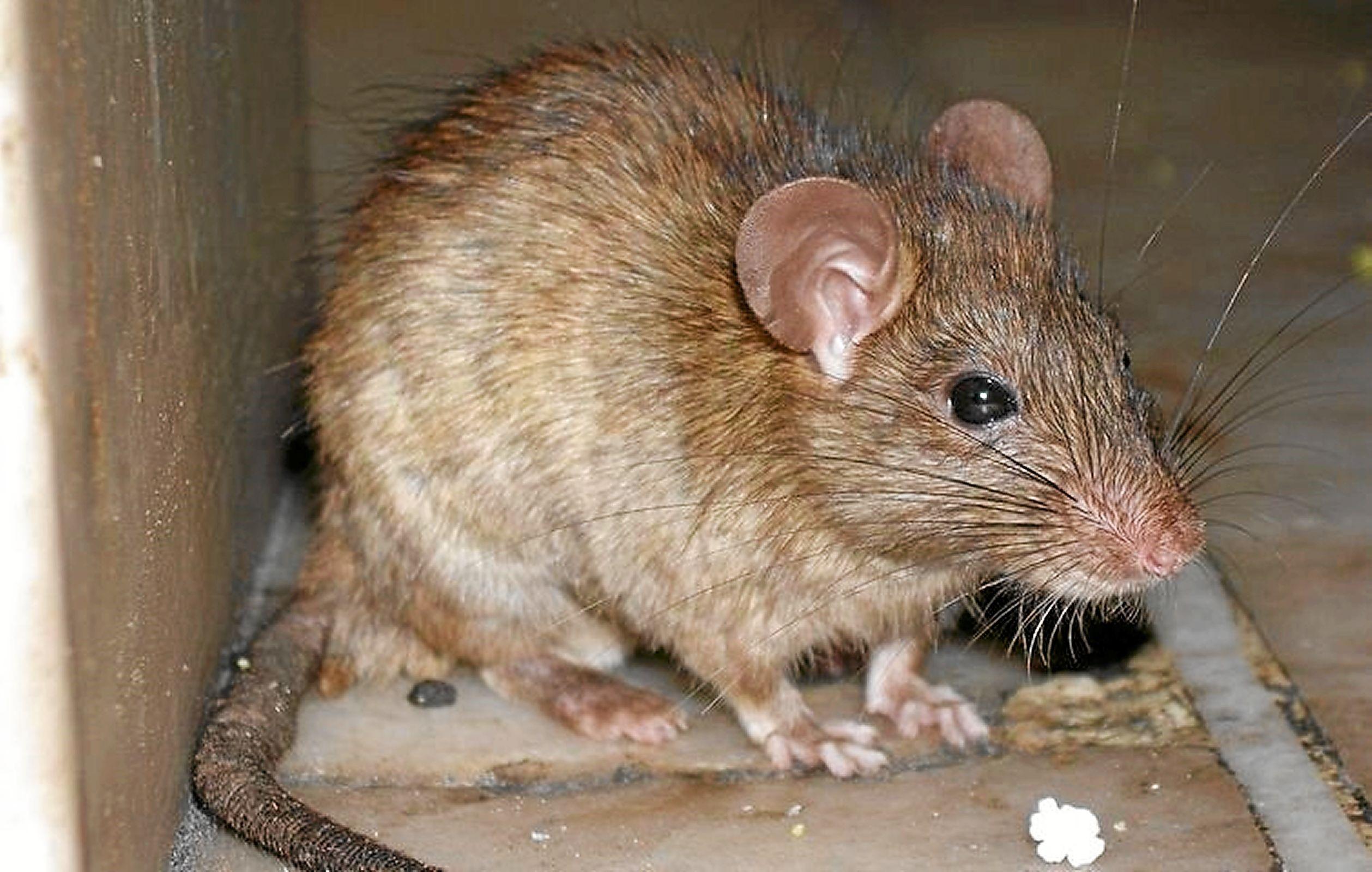 Der er rotter ved havnebadet i Nibe. Derfor er det lukket midlertidigt. Arkivfoto