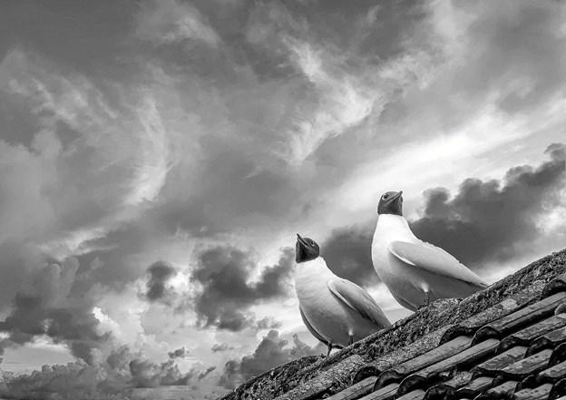 """""""Autonome måger"""". Det er i år 3. gang, at fotoklubben udstiller på Kappelborg. Første udstilling """"Særlige øjeblikke"""" kunne opleves i 2014, og var en visuel udgave af året der gik, i forbindelse med Købstadsjubilæet i 2013. Foto: Linda Mølgaard"""
