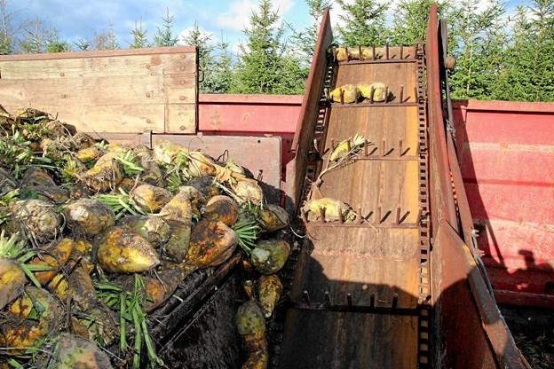 Roerne kom over i en stor container. Foto: Flemming Dahl Jensen