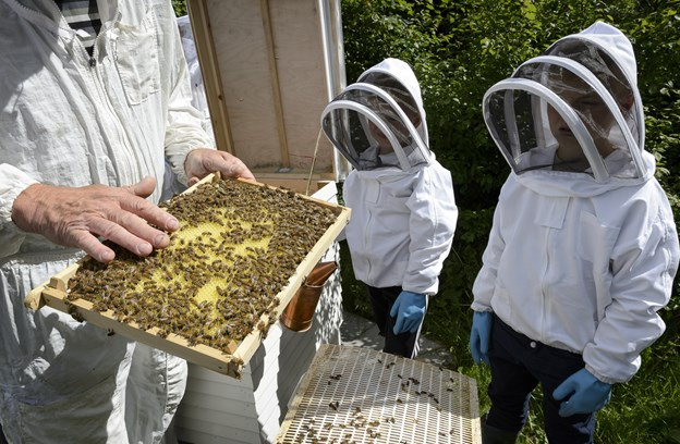 Niels Rasmussen demonstrerer her, for børnene ved byhaverne bag Gasmuseet, at bier ikke stikker, når du rører blidt ved dem. Prøv bare selv. Arkivfoto: Peter Broen Peter Broen