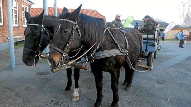 Også hestevognskørsel var på programmet. Foto: Allan Mortensen Allan Mortensen