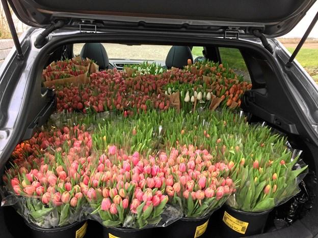 Lions Club Freja i Løgstør på vej ud med tulipaner - til fordel for kampen mod bl. a. narko- og alkoholmisbrug. Privatfoto