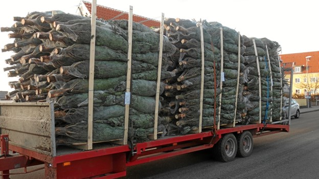 Årets juletræer er ankommet til KFUM spejderne på Markvej.