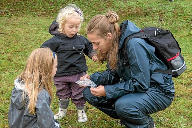 Børnene vil hele tiden følge med i, hvor mange insekter de har fanget. Foto: Niels Helver