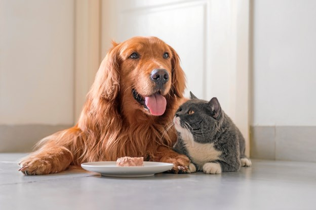 Dyrenes kost har stor betydning. Pr-foto