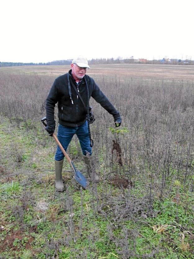 Du kan frit hente juletræsplanter på en mark, der ligger sydøst for Rebild med tilkørsel fra Lyngvej. Marken ejes af Rebild Vandværk. Foto: Privat