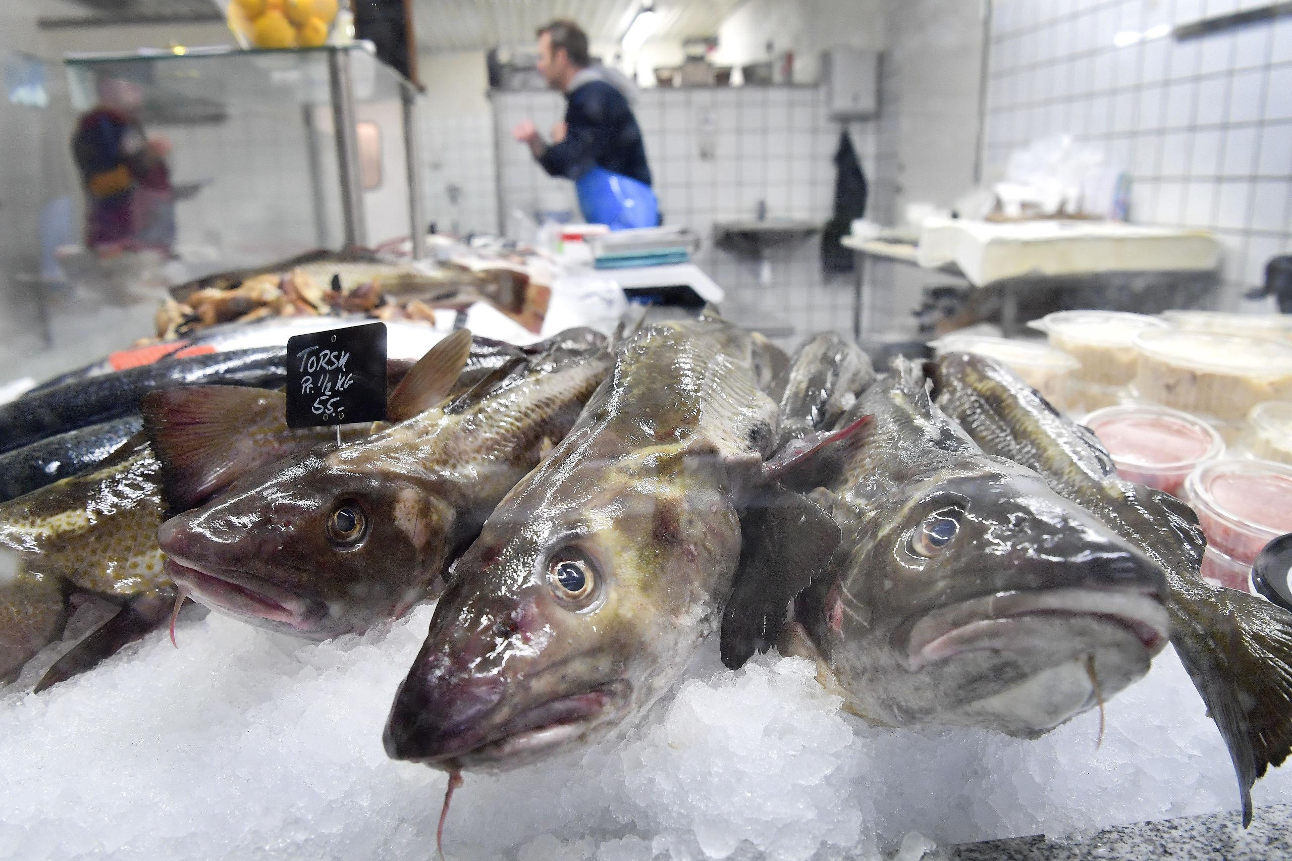 Torsk er en særdeles delikat spise, og mange foretrækker at spise fisken garneret med gode kartofler kombineret med en kraftig sennepssovs. Foto: Michael Koch