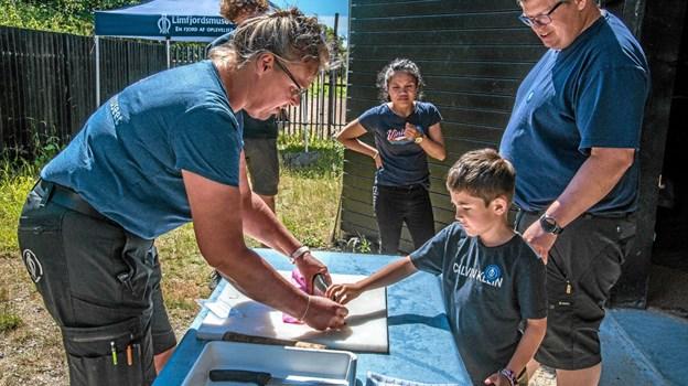 En ørred dissekeres og Tine viser hvordan man gør. Man må gerne mærke fisken. Foto: Mogens Lynge Mogens Lynge