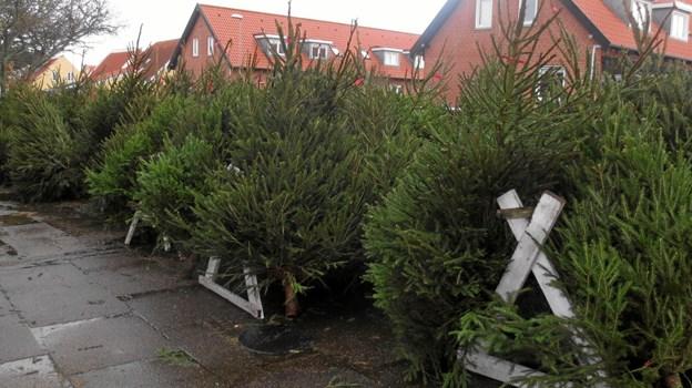 Fredag klokken 14 går det løs med juletræssalg - og de to første weekender i december er der tilmed julestue med kaffe og friskbagte vafler.