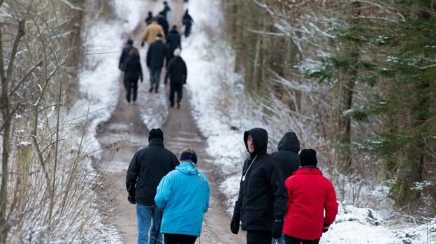 Udover motion giver en gåtur i smukke omgivelser også mulighed for dejlige naturoplevelser.? Arkivfoto: Bo Lehm. © Bo Lehm