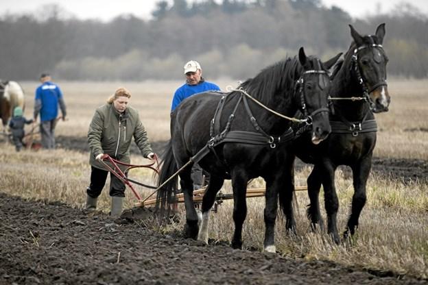 Publikum kunne også selv få tømmen i hånden og prøve kræfter med markarbejdet. Foto: Allan Mortensen Allan Mortensen
