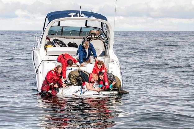 Hans Ole Olsen fra Second Wind, der var med i september som mærkebåd, fortæller om mærkningen af tunfiskene og udsætningen