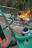 Ukrudtsbrænder satte ild til hæk: - Der skal så lidt til i det her vejr