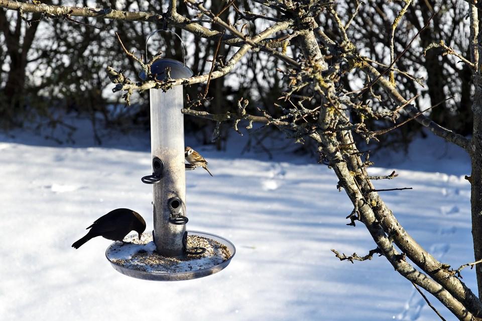 Ny Undgå at havens fugle bliver syge af foderbrættet | Nordjyske.dk BB23