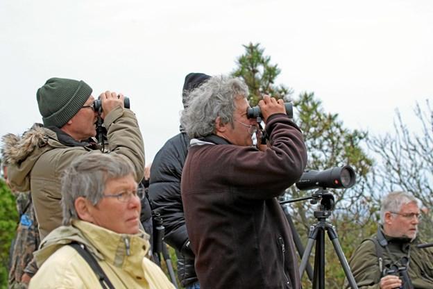 4. maj kan du lære en masse om fugle ved at komme på tur med en ekspert.