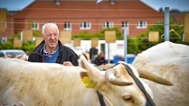 De mange kødkvægsracer tiltrak stor opmærksomhed. Foto: Ole Iversen Ole Iversen