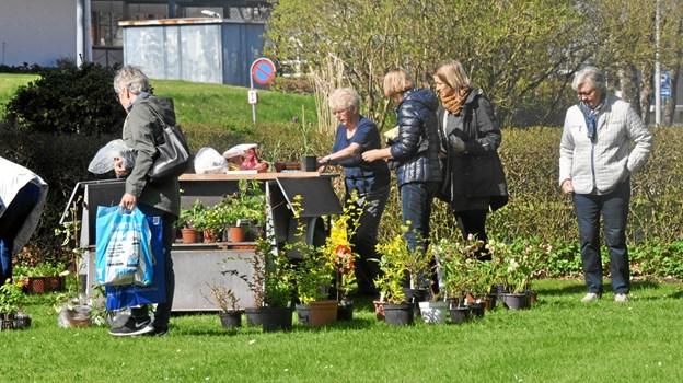 Lørdag 11. maj er der plantemarked i Fjerritslev. Privatfoto