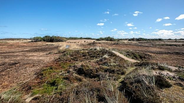 Der er allerede blevet ryddet en masse på Grenen, men der er stadig for mange uønskede buske og træer. Privatfoto.