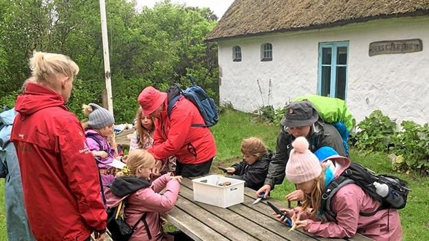 Både børn og voksne har nydt godt af Birgitte Wilsted Simonsens mange forskellige naturoplevelser. Privatfoto Privat