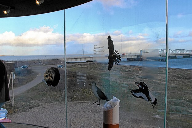 På ruderne i tårnet er der oplysninger om forskellige fugle. Foto: Hans B. Henriksen Hans B. Henriksen