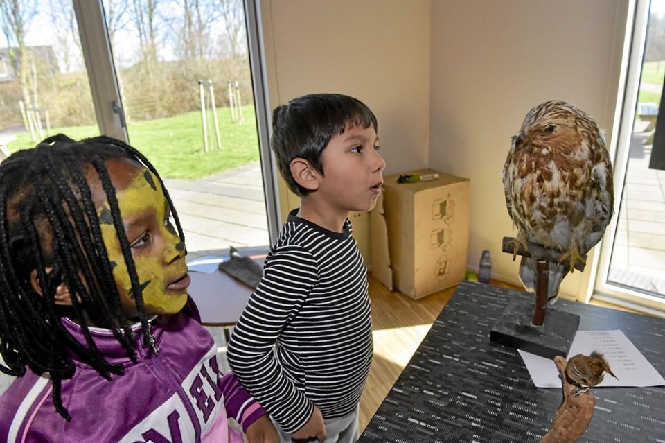 """70 børn havde en herlig dag i """"junglen"""". Her har Benedicte og Levi fra Lerpytters Friskole og Børnehave, opdaget en duehøg. Foto: Ole Iversen"""