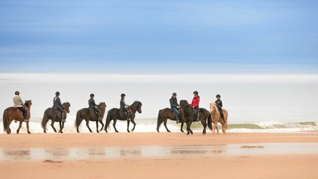 Fårup Sommerland tilbyder nu også ture på hesteryg i vinterugerne.Pressefoto