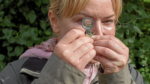 Alena Jespersen studerer planter gennem forstørrelsesglas. Foto: Niels Helver