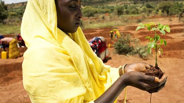 Etiopisk kvinde med et lille træ. Hun er en af millioner af mennesker, som er med til at betale prisen for klimaforandringer.  Folkekirkens Nødhjælp