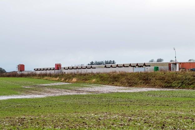 Minkfarmen på Røde Anes Vej syd for Hundborg har fået nye ejere og produktionen fortsætter.Arkivfoto: Diana Holm