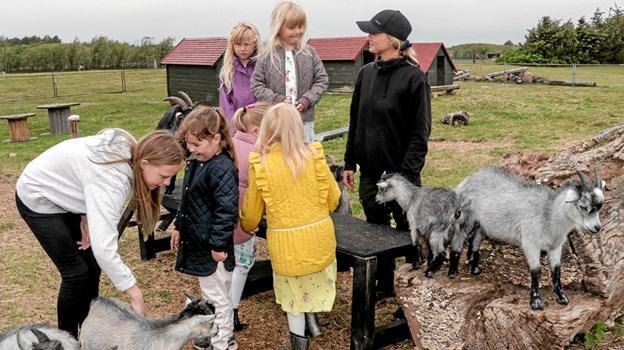 Sara Lassen fra Tornby, der fået en elevplads som dyrepasser hos Fun Park Hirtshals, fortæller børnene om dyrene. Foto: Peter Jørgensen Peter Jørgensen