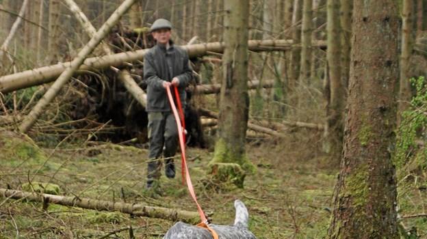 11 forskellige hunderacer er repræsenteret, når det 18. august går løs ved årets DM for schweisshunde i Rold Skov. ?Privatfoto