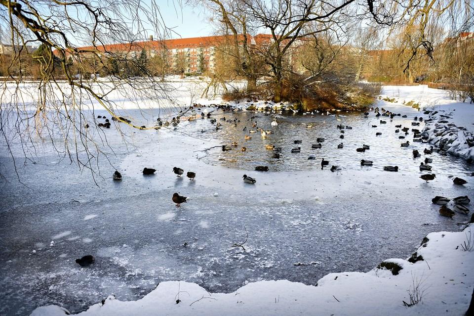 Dmi Har Prognosen Klar Sådan Bliver Vinteren Nordjyskedk