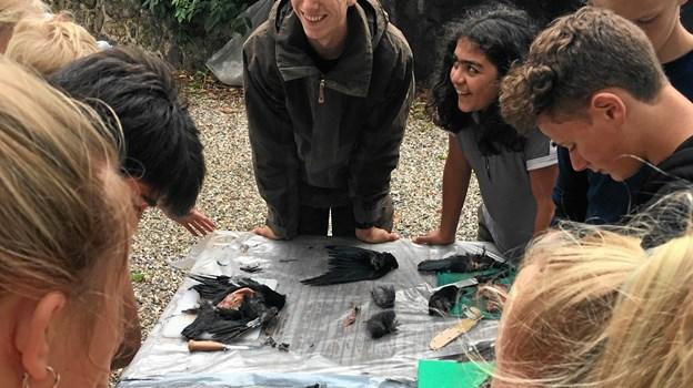 Unge rollemodeller kan formidle naturen i øjenhøjde med andre børn og unge, skabe nærvær og ægte begejstring over naturen
