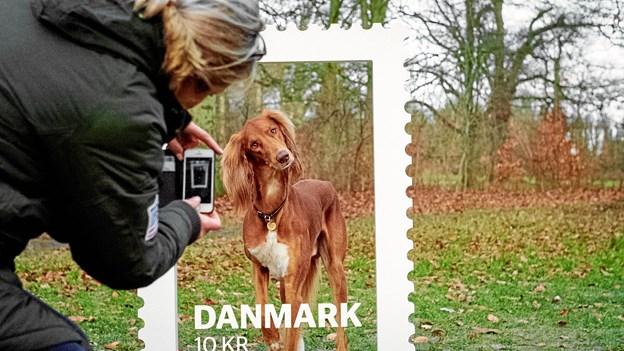 Alle elsker deres hund ...  Foto. PostNord.